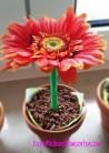 Blumen-Cup-Cake OK